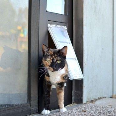 Лаз для кошки в двери купить или сделать своими руками