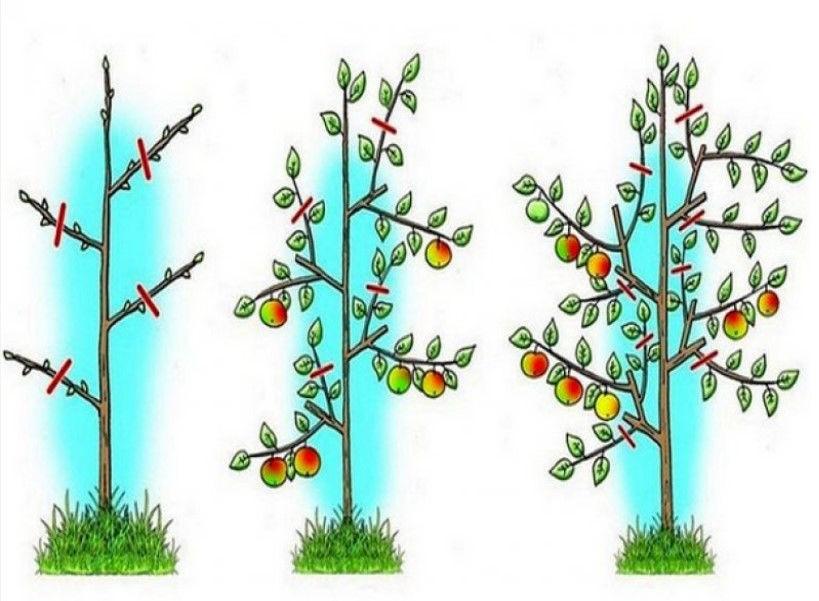 Когда и как нужно обрезать деревья и кустарники