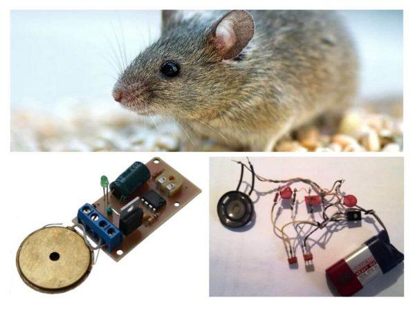 Как работают ультразвуковые отпугиватели крыс и мышей