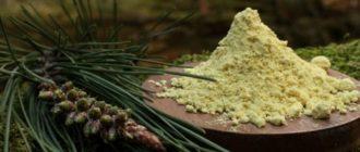 пыльца сосны для чего применяется